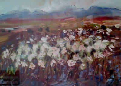 Bog cotton, Connemara